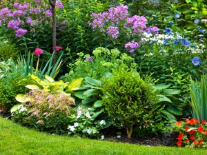 Bright garden greenery with a mixture if pink violet and indigo coloured flowers