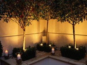 Lighting three trees in corner of garden