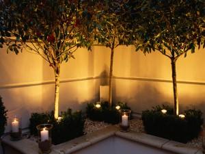 Lighting three trees in corner of garden