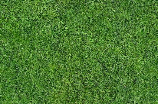 Natural Lawn grass texture