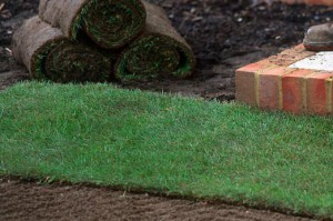 close up Natural Lawn with rolls of lawn in background