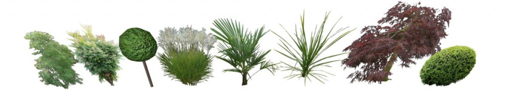 a selection eight architectural plants in a line on white background