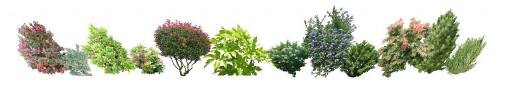 a selection of shrubs and evergreens on a plain white background