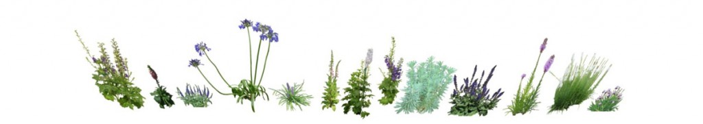 a selection of purple greenery and plants on plain white background