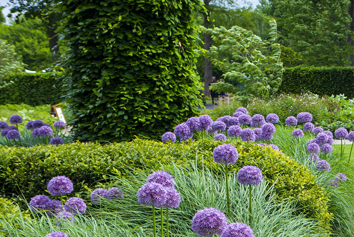 large modern garden design
