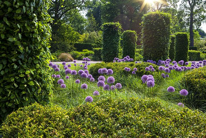 Wimbledon garden designer